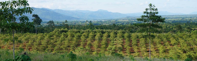 cashew plantation for sale