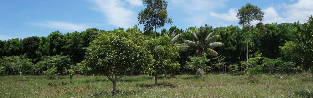 gmelina and fruit trees plantation for sale