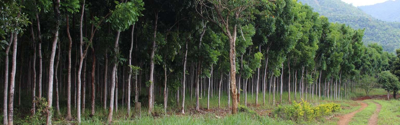 mahogany plantation for sale
