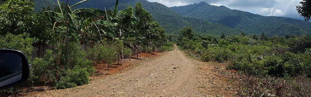 road leading to mahogany plantation for sale