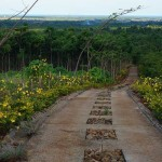 road leading to plantation mansion(6)