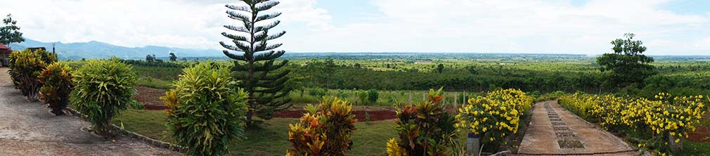 view from the plantation mansion
